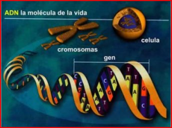 Herencia genetica humana para niños